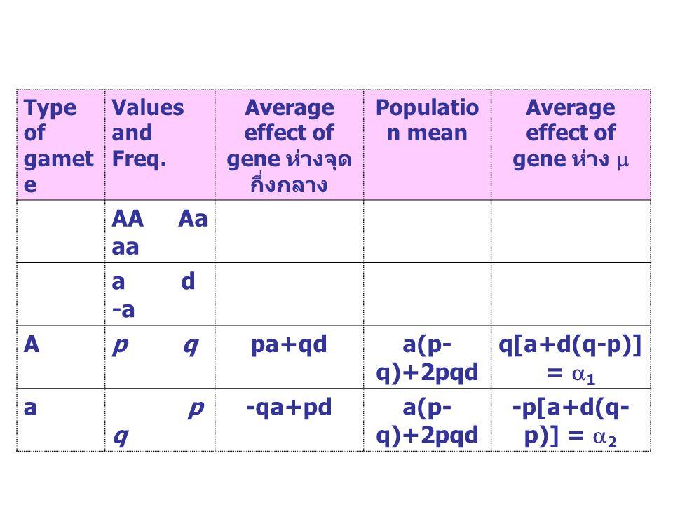 Average effect of gene ห่างจุดกึ่งกลาง Average effect of gene ห่าง 