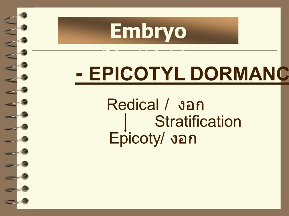 - EPICOTYL DORMANCY Embryo dormancy Redical / งอก Stratification