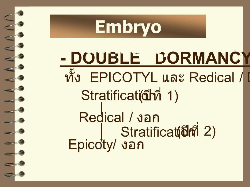 Embryo dormancy - DOUBLE DORMANCY ทั้ง EPICOTYL และ Redical / Dormant