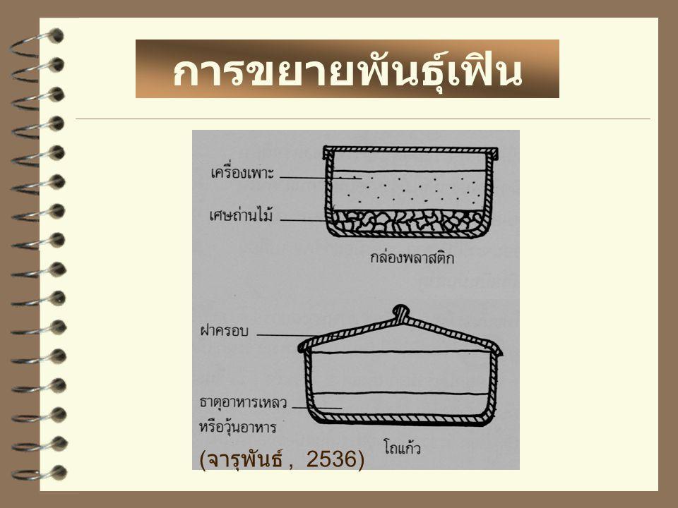 การขยายพันธุ์เฟิน (จารุพันธ์ , 2536)
