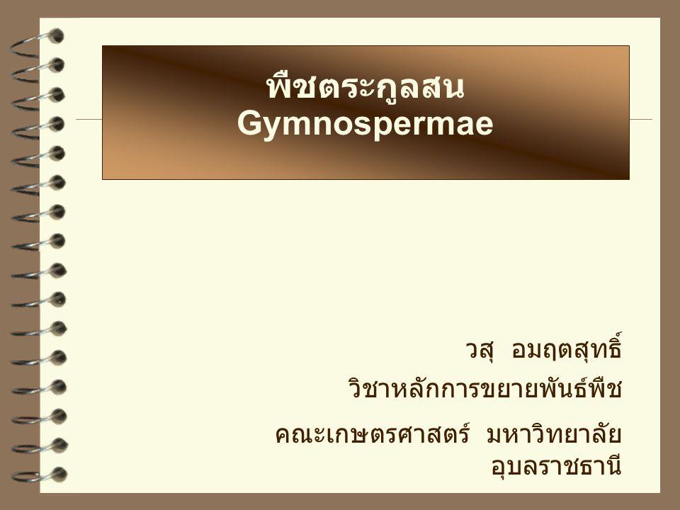 พืชตระกูลสน Gymnospermae