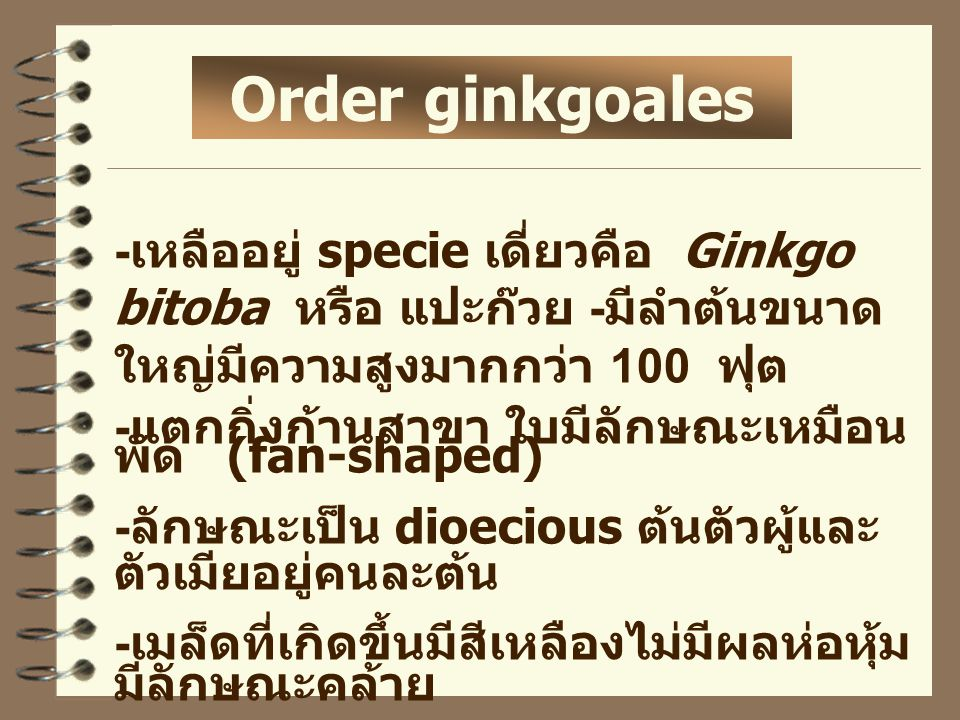 Order ginkgoales -เหลืออยู่ specie เดี่ยวคือ Ginkgo bitoba หรือ แปะก๊วย -มีลำต้นขนาดใหญ่มีความสูงมากกว่า 100 ฟุต.