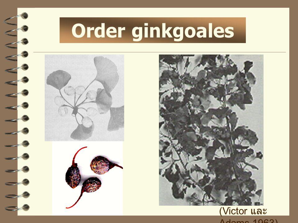 Order ginkgoales (Victor และ Adams,1963)