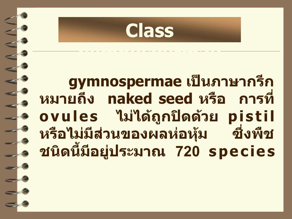 Class gymnospermae