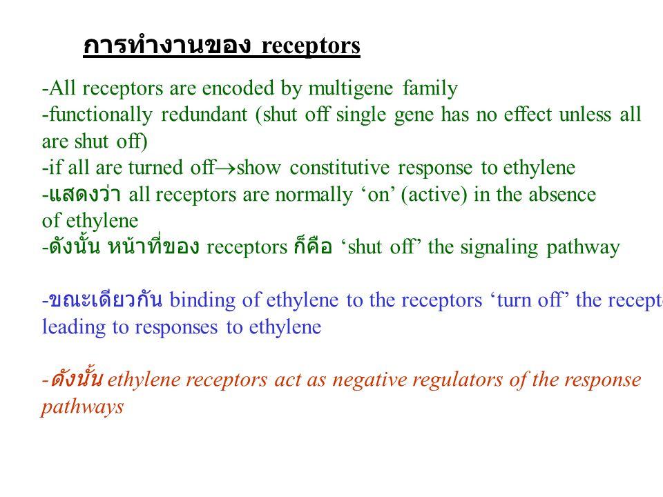 การทำงานของ receptors