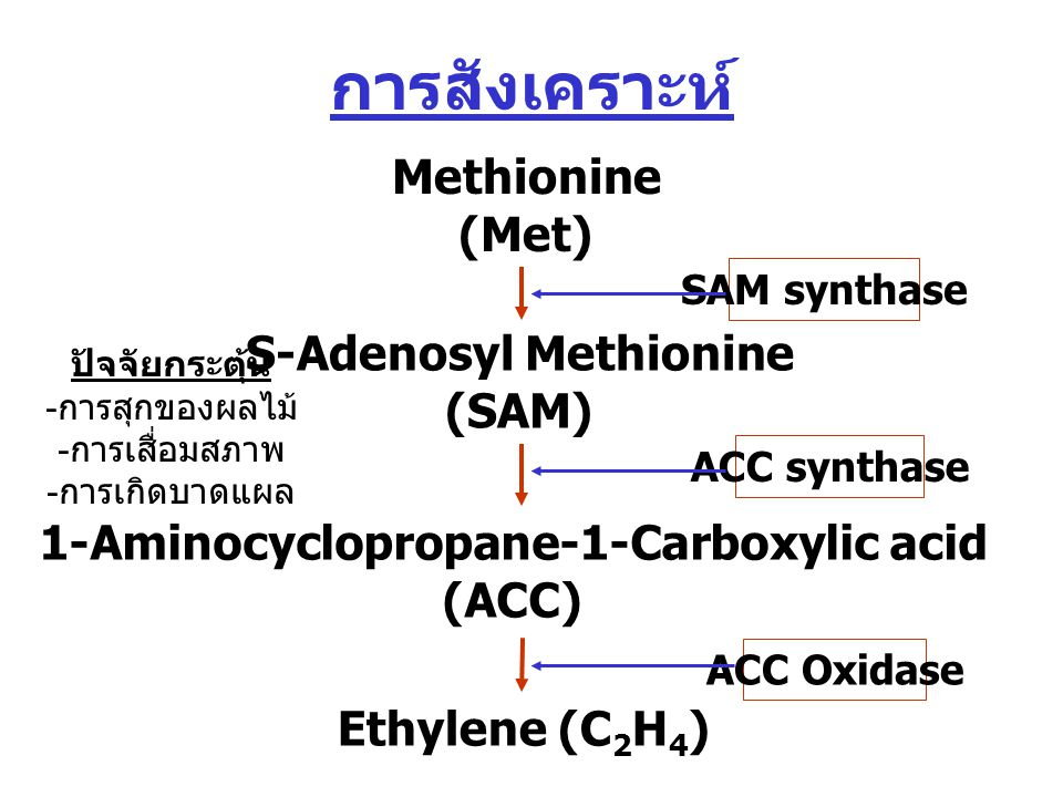 S-Adenosyl Methionine 1-Aminocyclopropane-1-Carboxylic acid