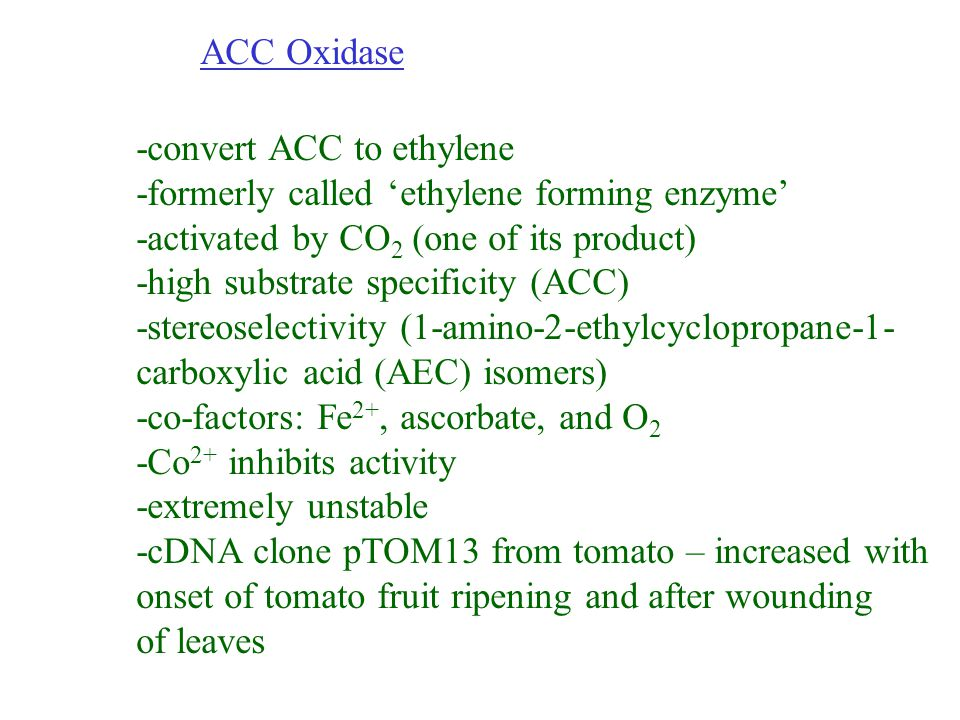 ACC Oxidase -convert ACC to ethylene. -formerly called 'ethylene forming enzyme' -activated by CO2 (one of its product)