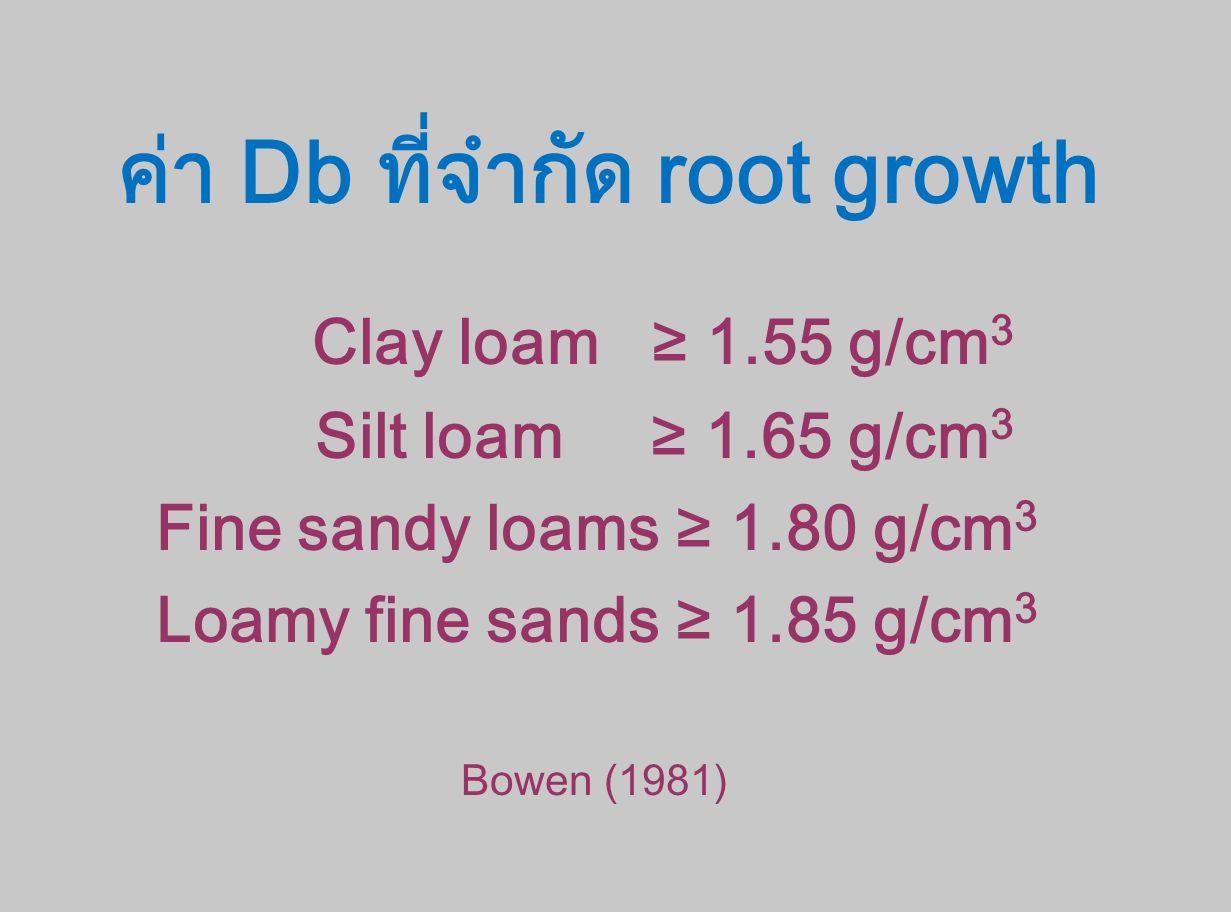ค่า Db ที่จำกัด root growth