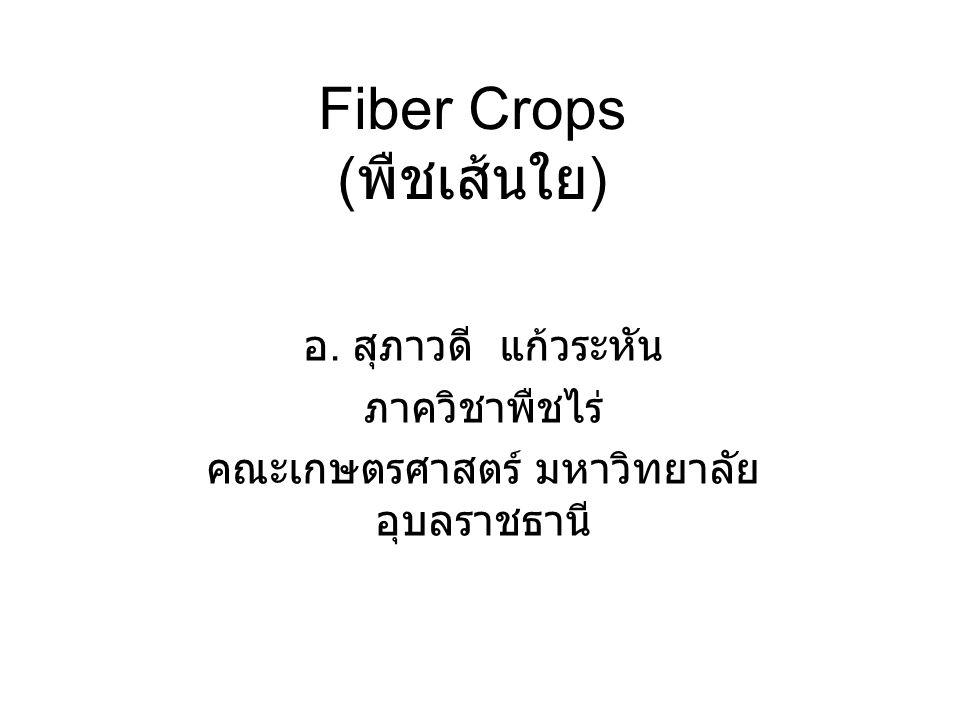Fiber Crops (พืชเส้นใย)