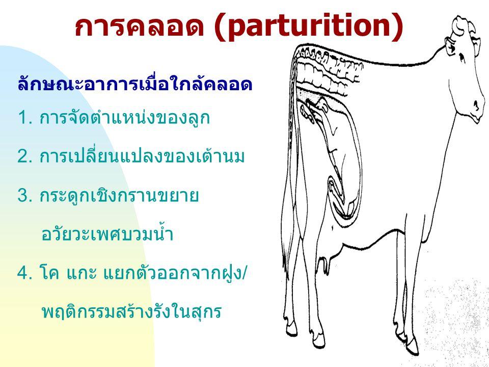 การคลอด (parturition)