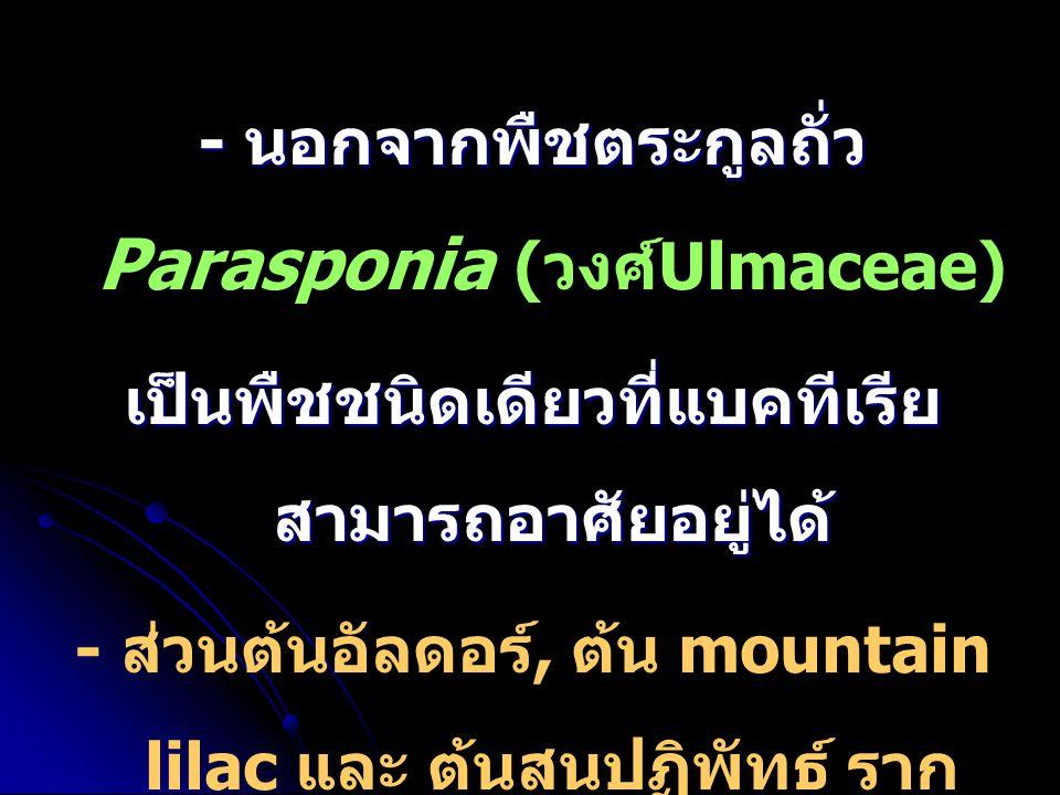 - นอกจากพืชตระกูลถั่ว Parasponia (วงศ์Ulmaceae)
