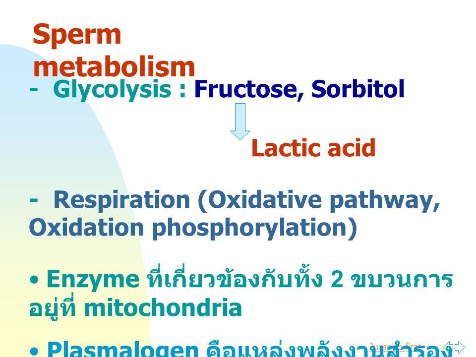 Sperm metabolism - Glycolysis : Fructose, Sorbitol Lactic acid