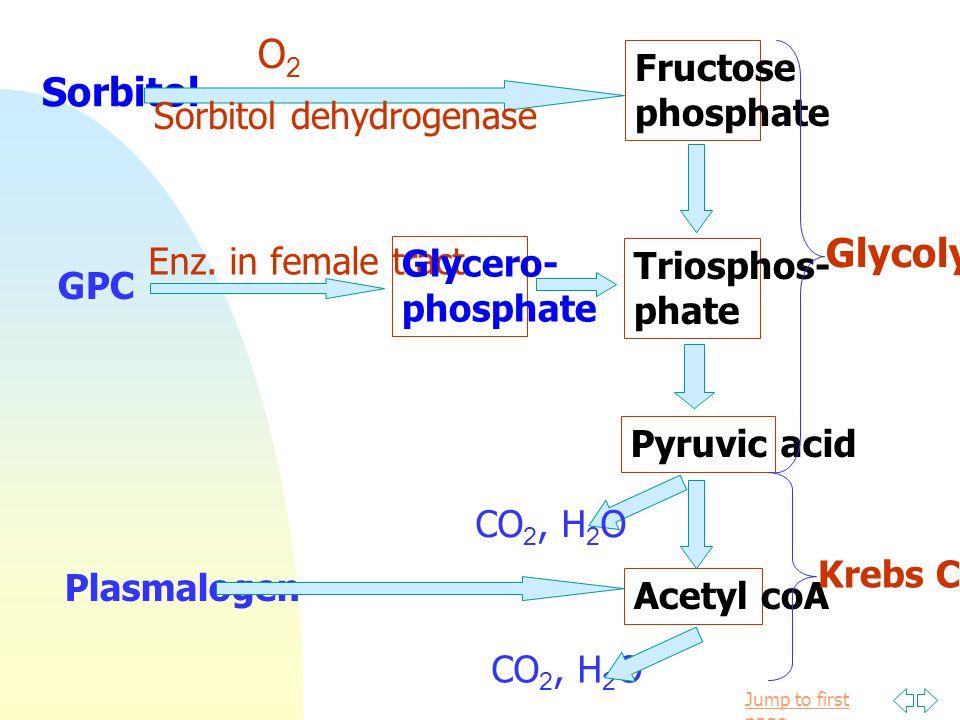 O2 Sorbitol Glycolysis Fructose phosphate Sorbitol dehydrogenase