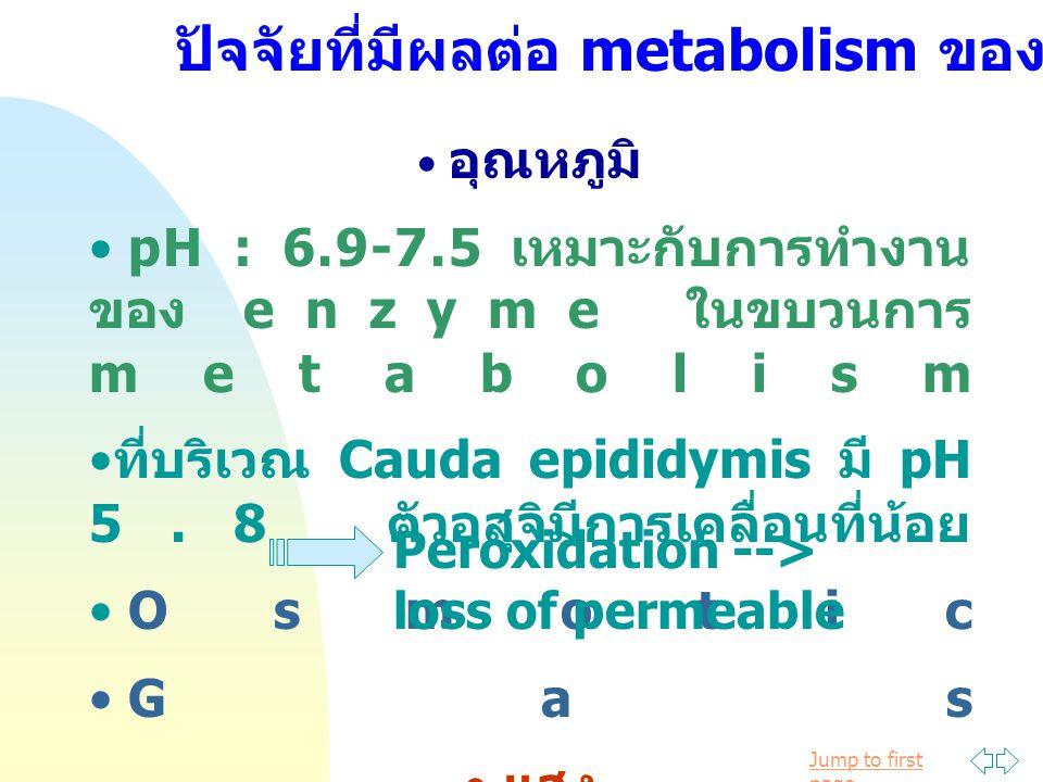ปัจจัยที่มีผลต่อ metabolism ของ sperm
