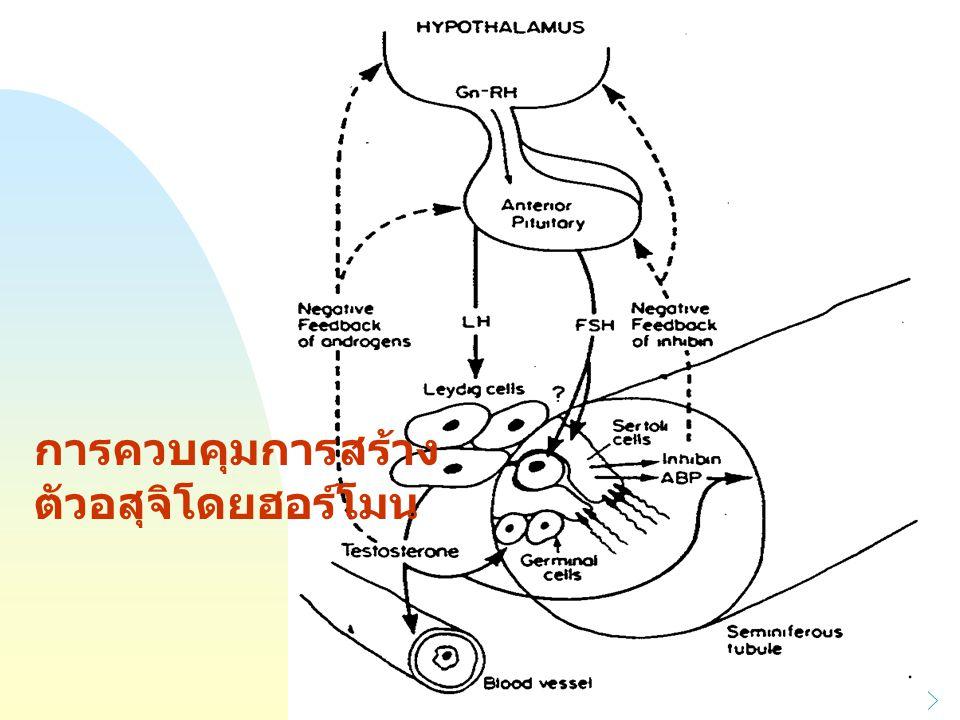 การควบคุมการสร้าง ตัวอสุจิโดยฮอร์โมน