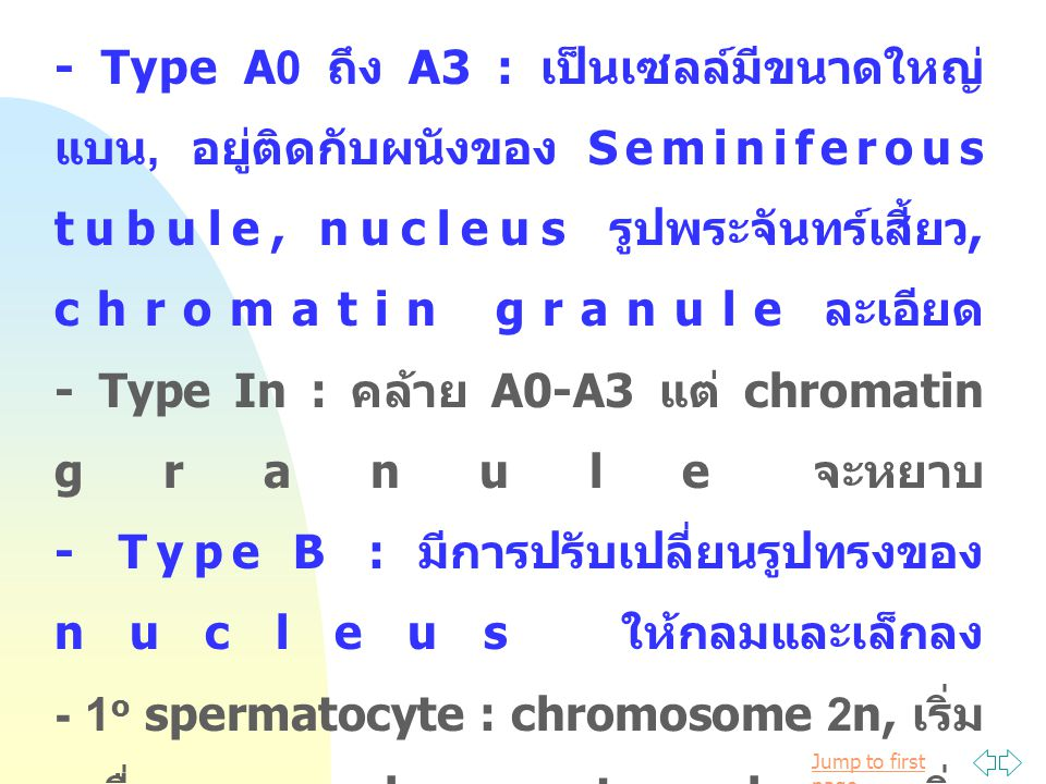 - Type A0 ถึง A3 : เป็นเซลล์มีขนาดใหญ่ แบน, อยู่ติดกับผนังของ Seminiferous tubule, nucleus รูปพระจันทร์เสี้ยว, chromatin granule ละเอียด