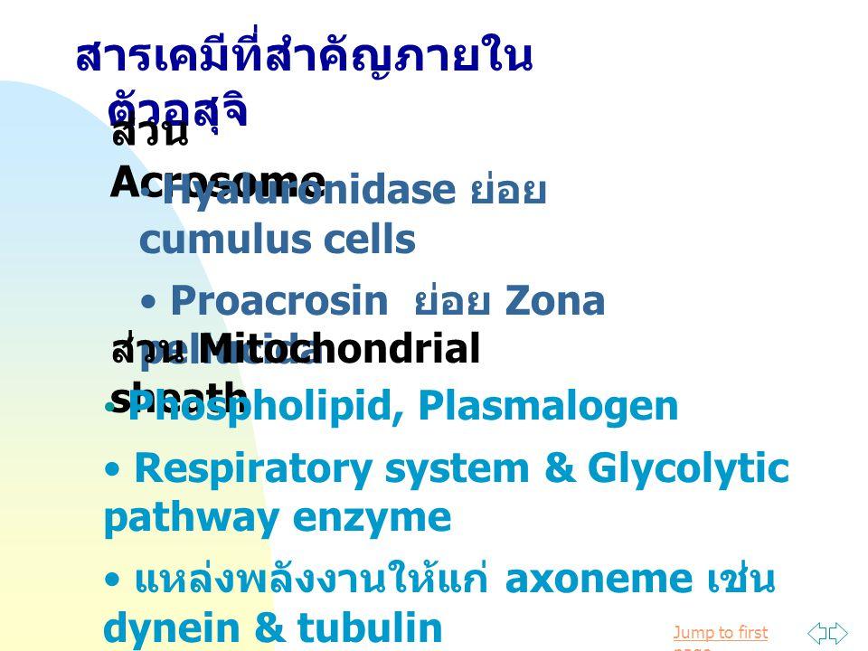 สารเคมีที่สำคัญภายในตัวอสุจิ