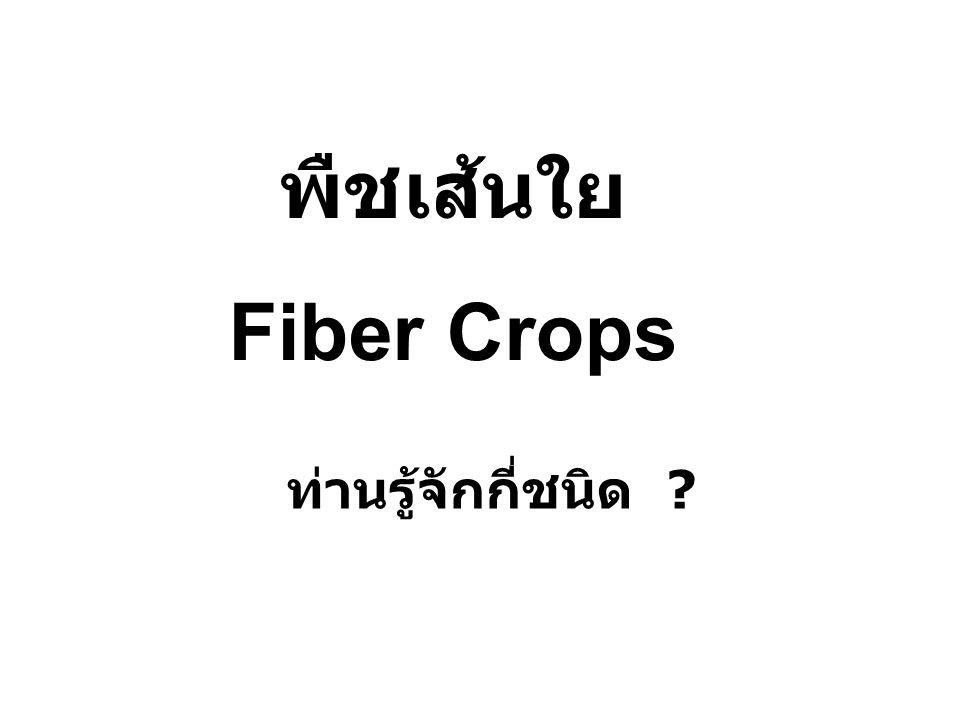 พืชเส้นใย Fiber Crops ท่านรู้จักกี่ชนิด