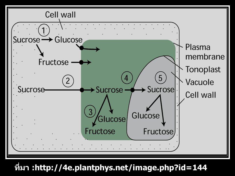 ที่มา :http://4e.plantphys.net/image.php id=144