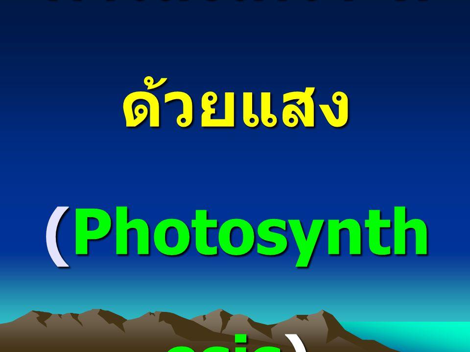 การสังเคราะห์ด้วยแสง (Photosynthesis)