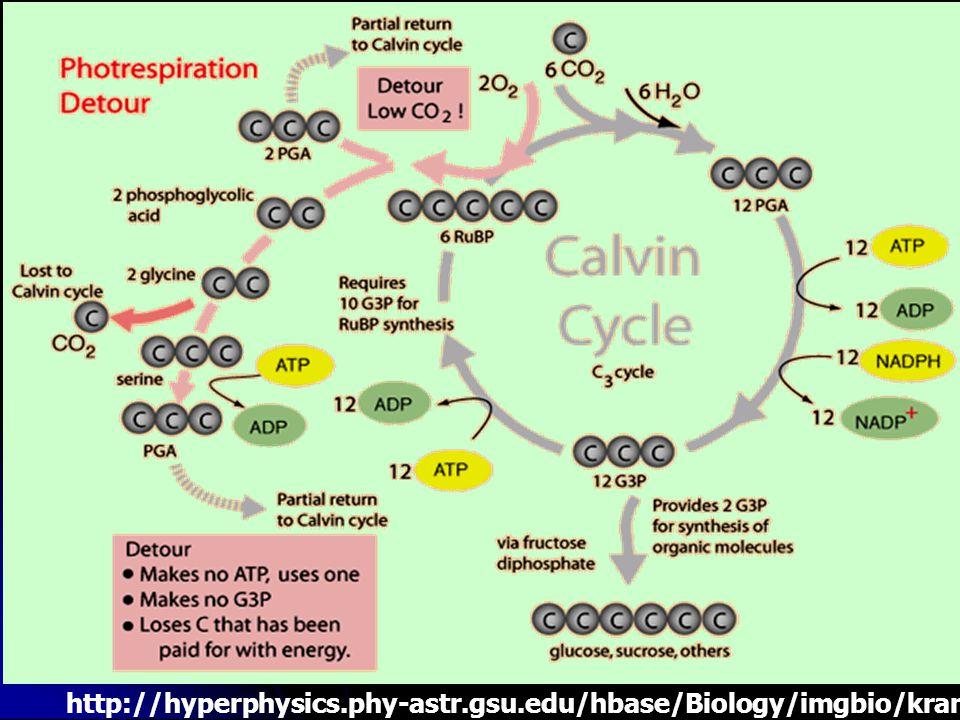 http://hyperphysics. phy-astr. gsu. edu/hbase/Biology/imgbio/kranzm