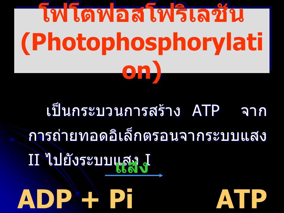 โฟโตฟอสโฟริเลชัน (Photophosphorylation)