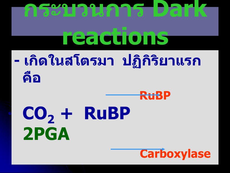 กระบวนการ Dark reactions