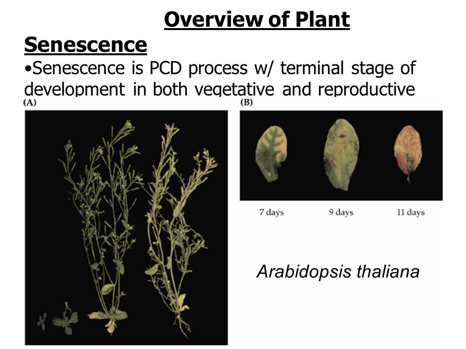 Overview of Plant Senescence
