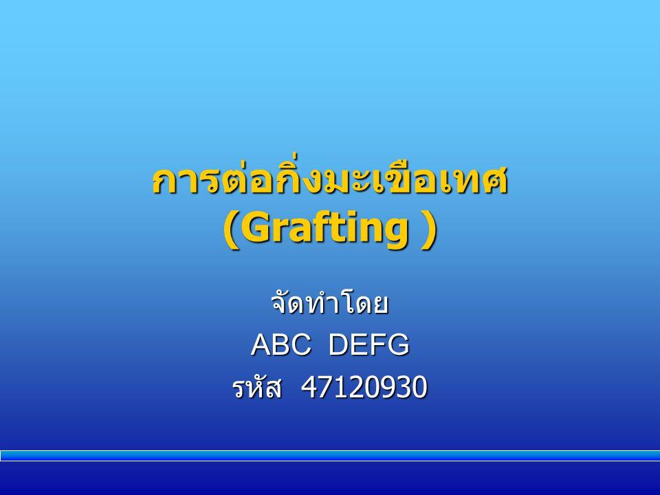 การต่อกิ่งมะเขือเทศ (Grafting )
