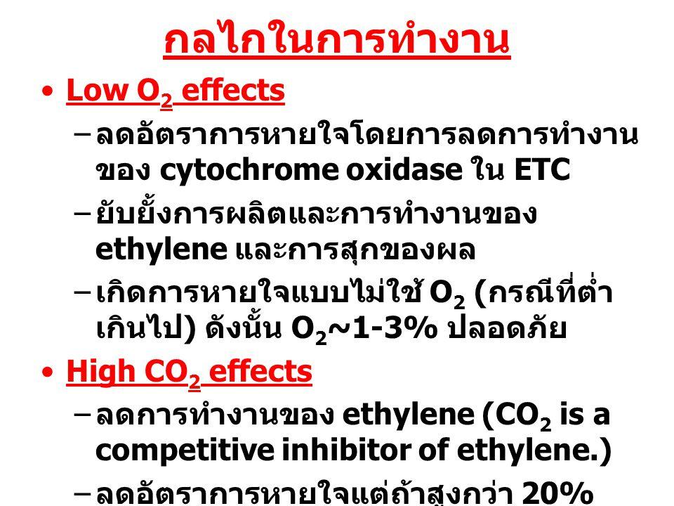 กลไกในการทำงาน Low O2 effects