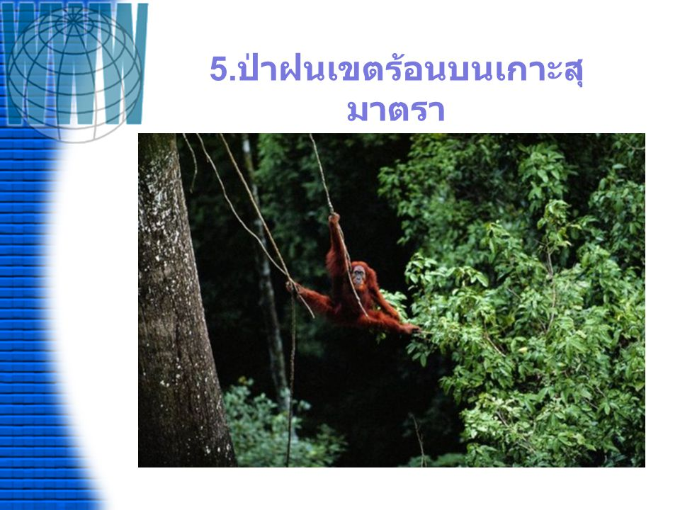 5.ป่าฝนเขตร้อนบนเกาะสุมาตรา