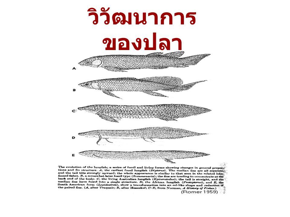 วิวัฒนาการของปลา