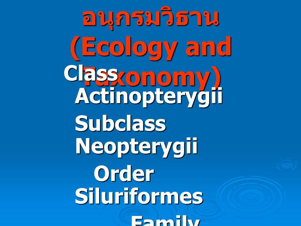 นิเวศน์วิทยาและอนุกรมวิธาน (Ecology and Taxonomy)
