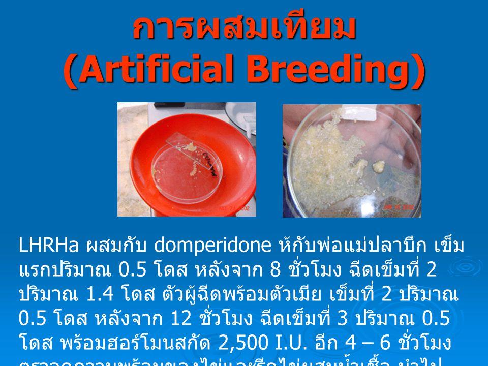 การผสมเทียม (Artificial Breeding)