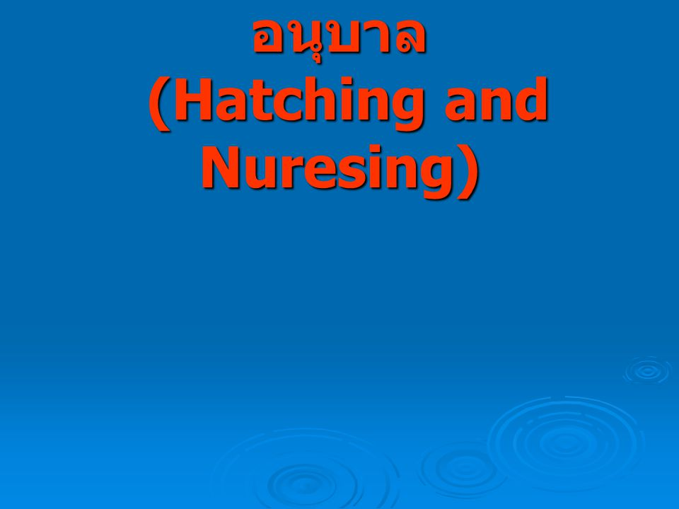 การเพาะฟักและการอนุบาล (Hatching and Nuresing)