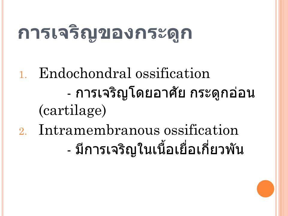 การเจริญของกระดูก Endochondral ossification