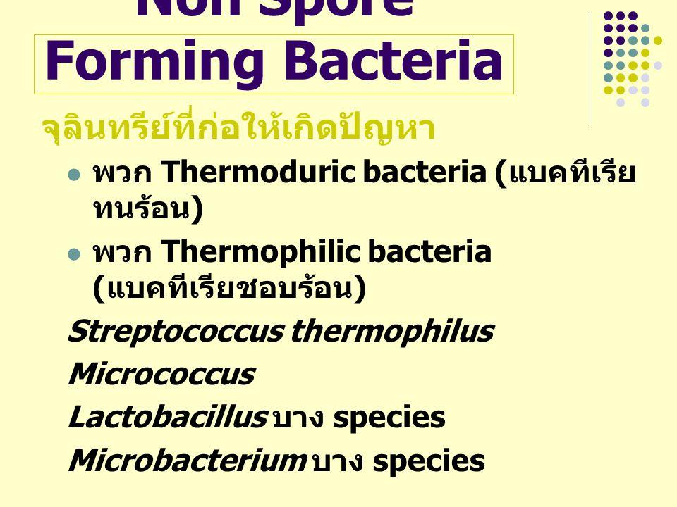 Non Spore Forming Bacteria