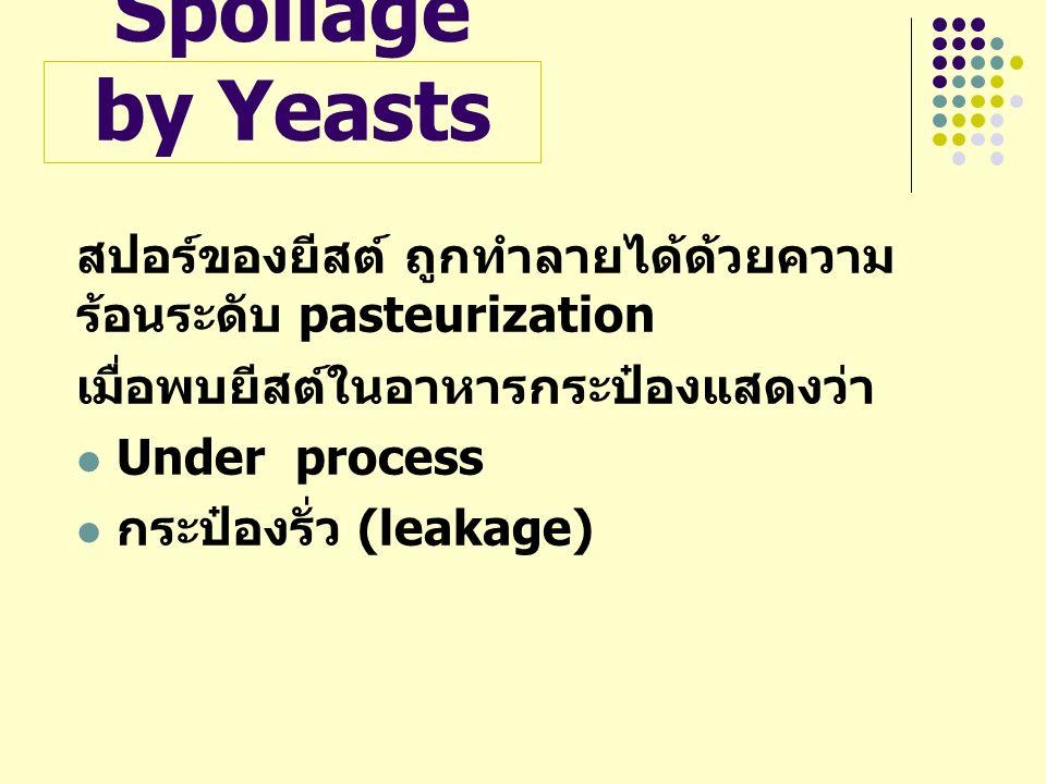 Spoilage by Yeasts สปอร์ของยีสต์ ถูกทำลายได้ด้วยความร้อนระดับ pasteurization. เมื่อพบยีสต์ในอาหารกระป๋องแสดงว่า.