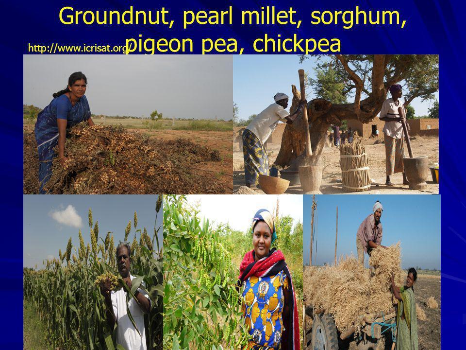 Groundnut, pearl millet, sorghum, pigeon pea, chickpea
