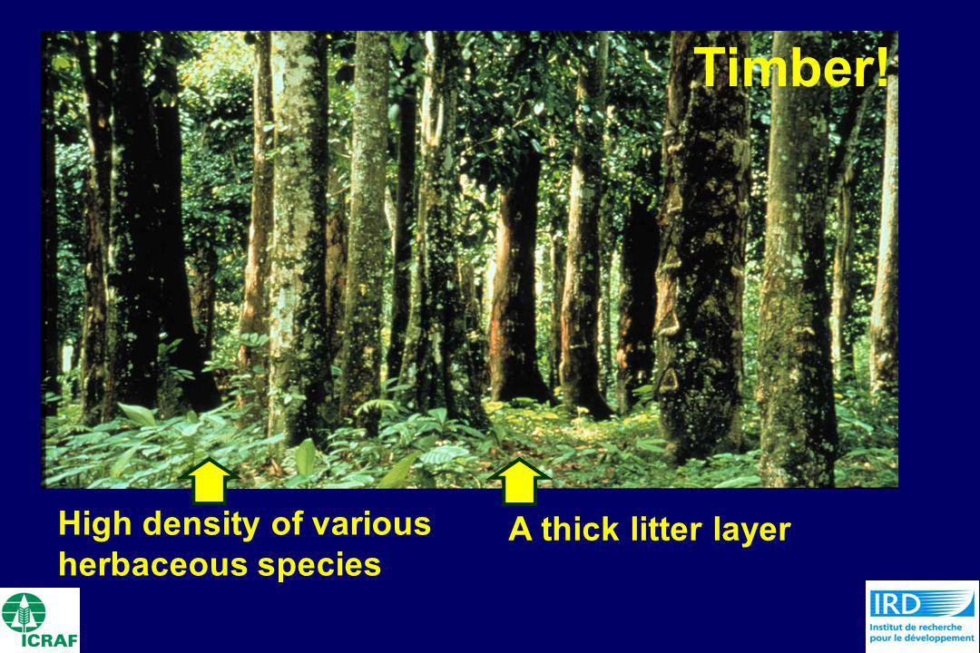Timber! High density of various herbaceous species