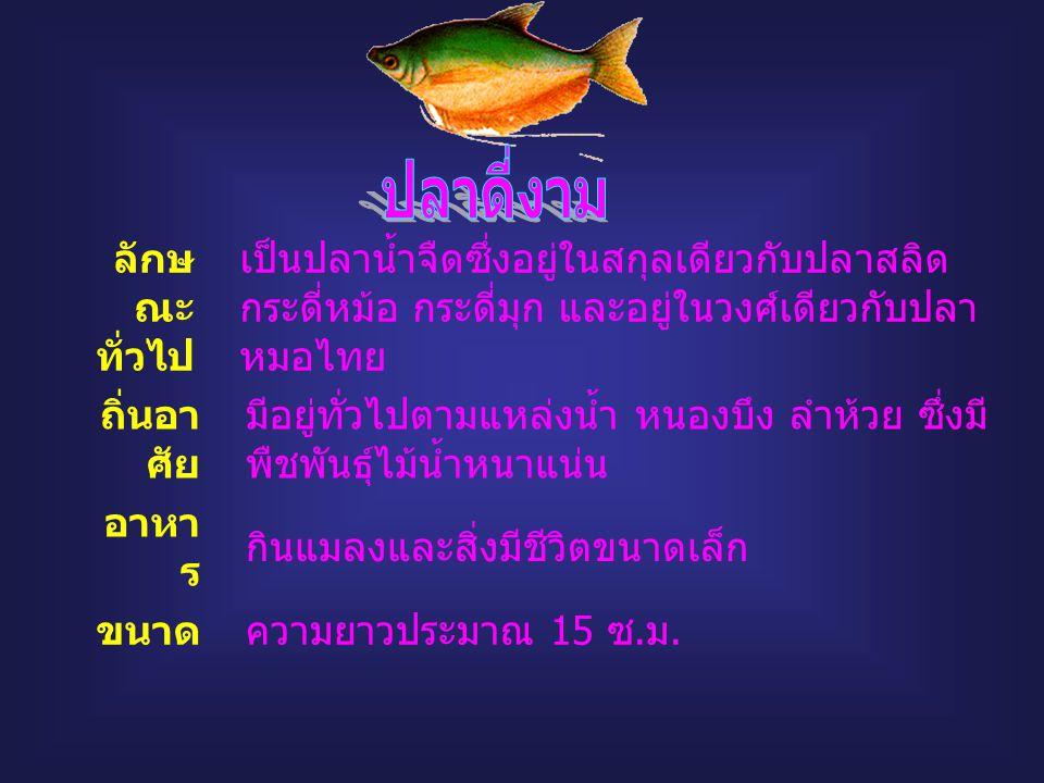 ปลาดี่งาม กา ลักษณะทั่วไป