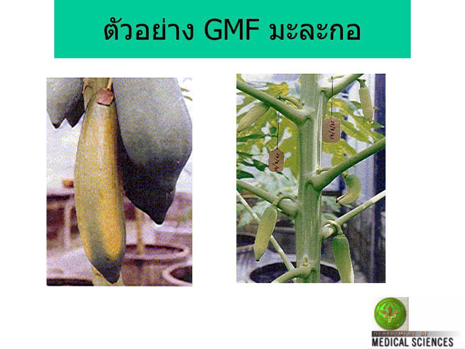 ตัวอย่าง GMF มะละกอ