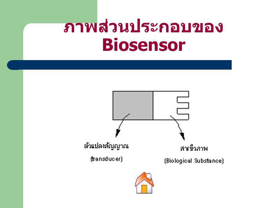 ภาพส่วนประกอบของ Biosensor