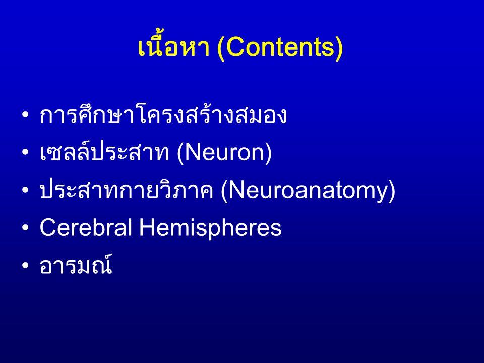 เนื้อหา (Contents) การศึกษาโครงสร้างสมอง เซลล์ประสาท (Neuron)