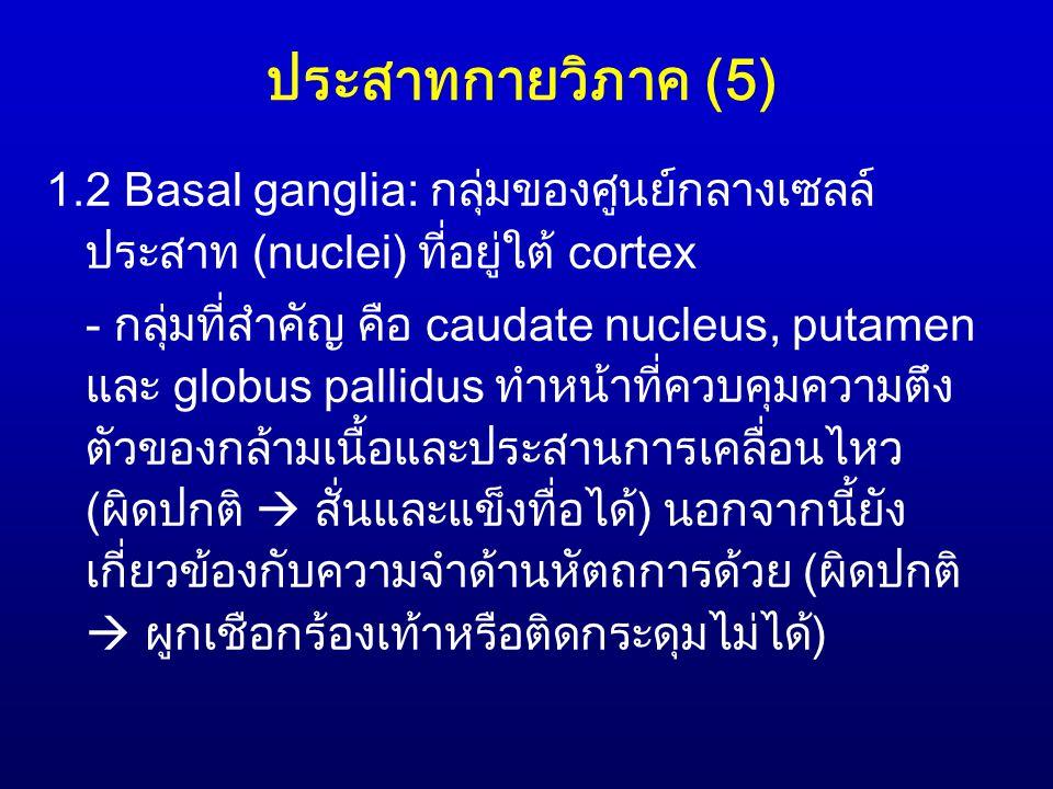 ประสาทกายวิภาค (5) 1.2 Basal ganglia: กลุ่มของศูนย์กลางเซลล์ประสาท (nuclei) ที่อยู่ใต้ cortex.