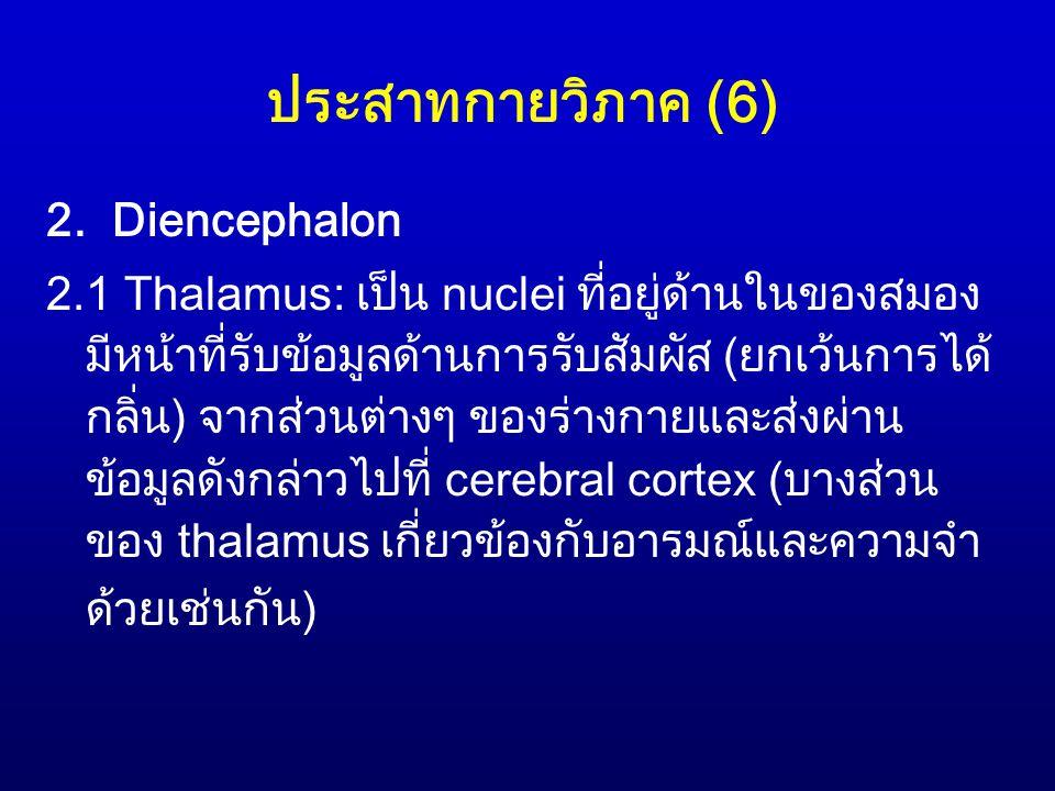 ประสาทกายวิภาค (6) 2. Diencephalon