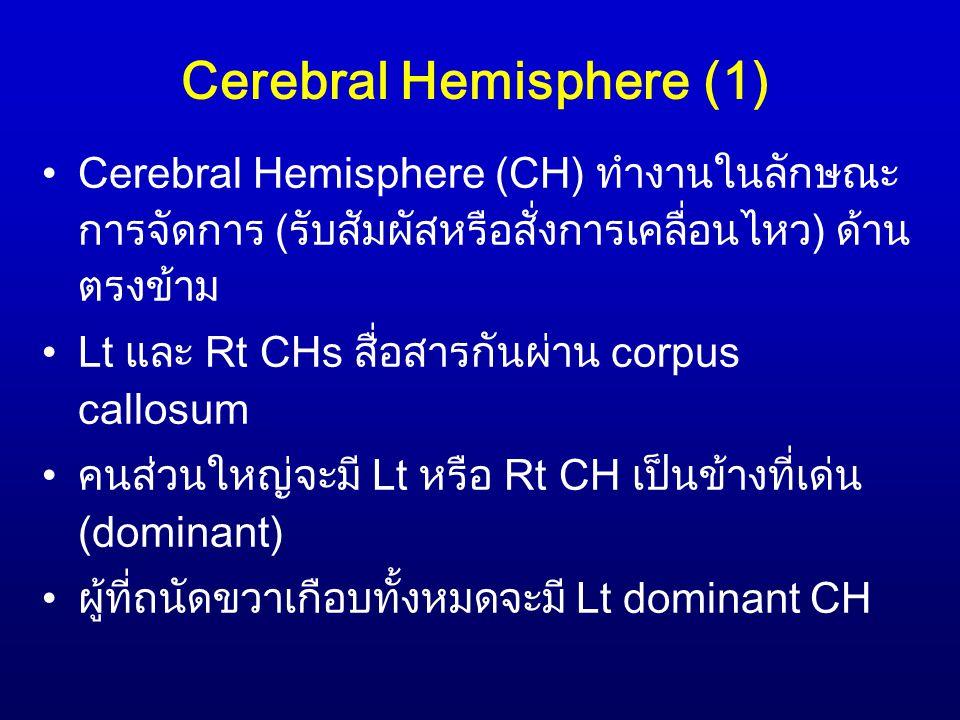 Cerebral Hemisphere (1)