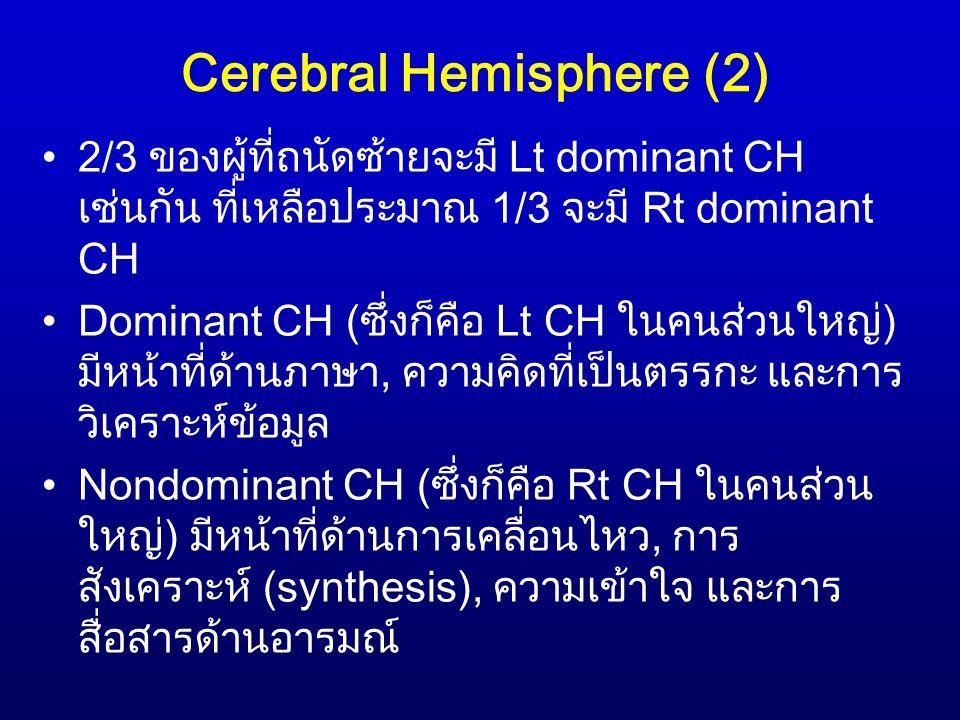 Cerebral Hemisphere (2)