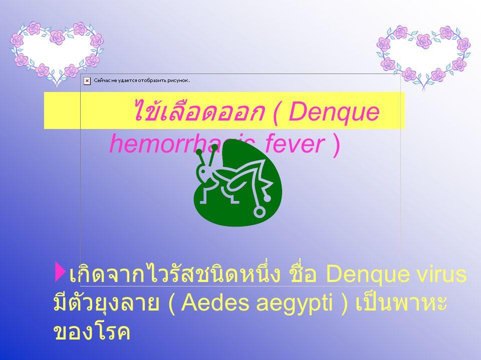 ไข้เลือดออก ( Denque hemorrhagic fever )