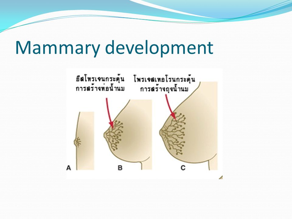 Mammary development